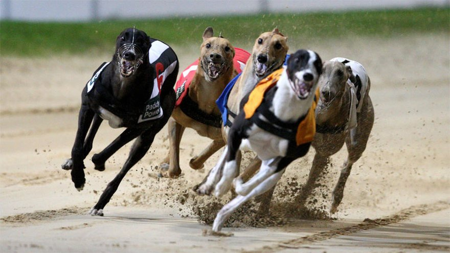 East anglian greyhound derby betting online online cricket match session betting sites